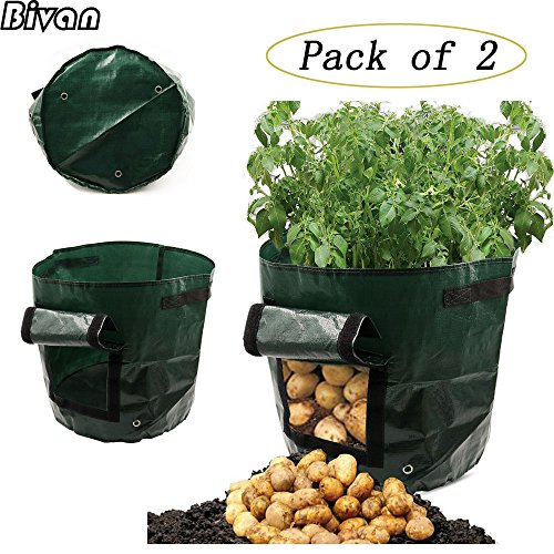 Planter Vegetable Garden - 4
