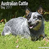 Australian Cattle Dog Calendar 2017 - Dog Breed Calendars - 2016 - 2017 wall calendars - 16 Month by Avonside