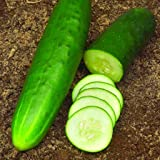 """Straight Eight"" Cucumber Seeds, 150+ Premium Heirloom Seeds, Gardeners Choice!, Cucumis Sativis, (Isla's Garden Seeds…"