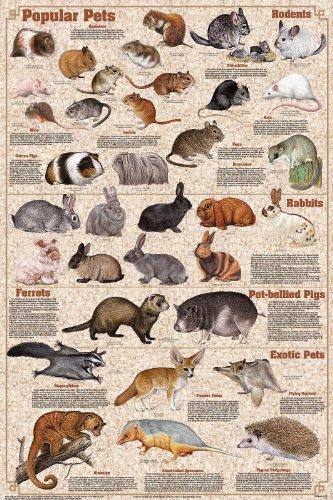 Laminated Popular Pets Poster (Best Pet Pig Breeds)