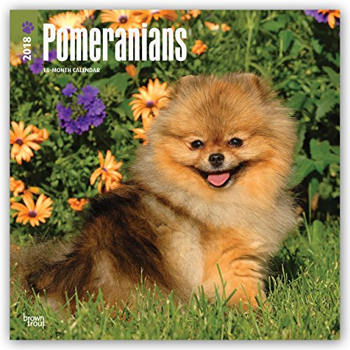 Pomeranians 2018 12 X 12 Inch Monthly Square Wall Calendar, Animals Small Dog Breeds Pet (Multilingual Edition)