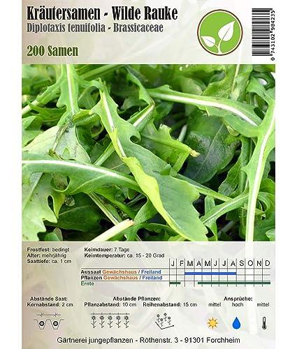 Semillas de hierbas - Salvaje rúcula - Diplotaxis tenuifolia - Brassicaceae 200 semillas