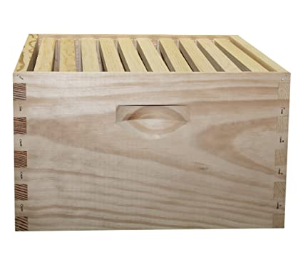 Amazon.com : Complete Hive Body Kit, Unpainted, Assembled, 10-Frame ...