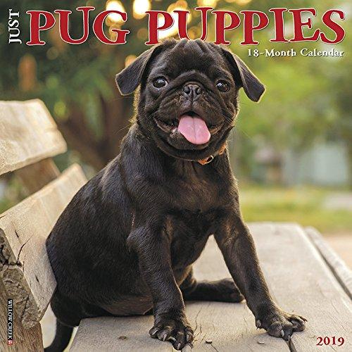 - Just Pug Puppies 2019 Wall Calendar (Dog Breed Calendar)