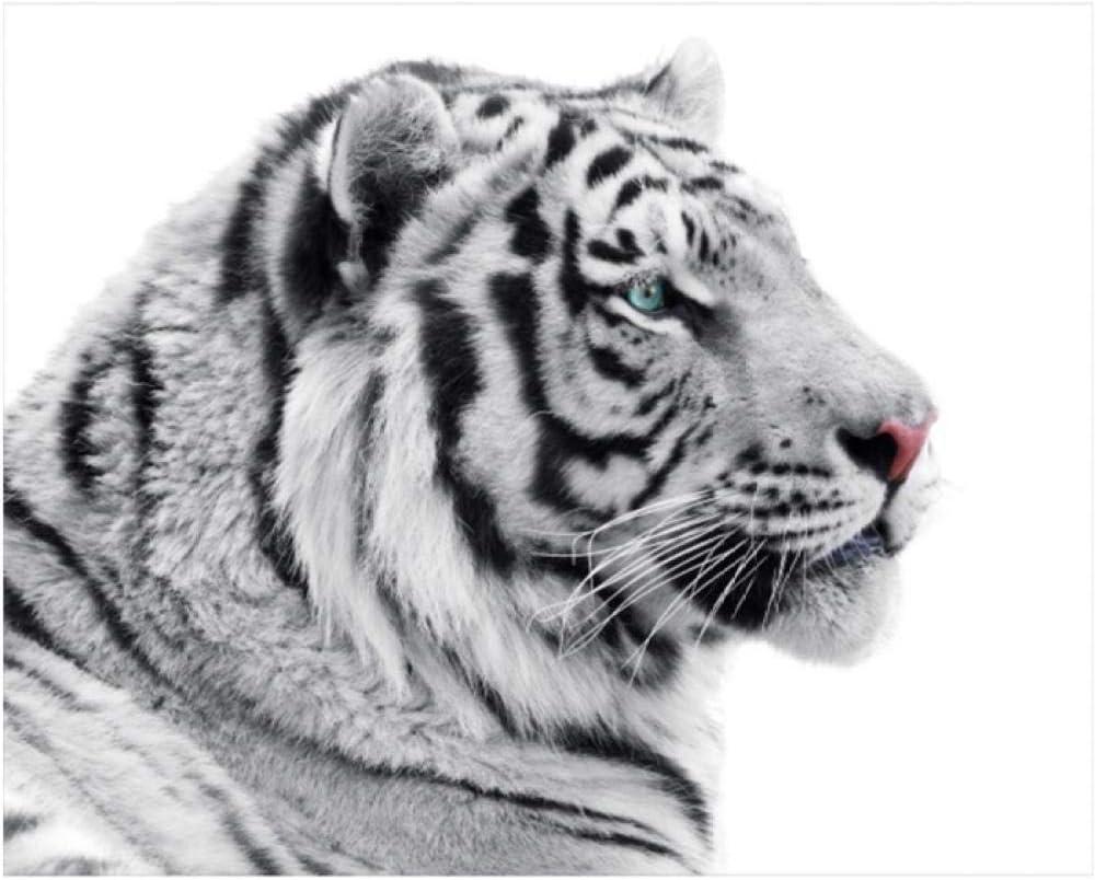 Jwqing Cuadro en Lienzo Tigre Blanco Animal Salvaje Carteles e Impresiones Cuadros para la decoración de la Sala de Estar (70x70cm sin Marco)