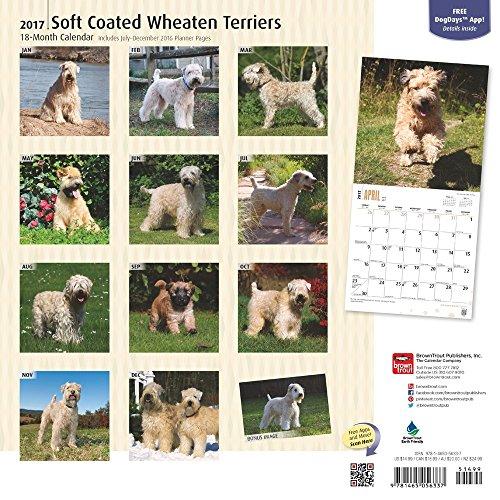 "Soft Coated Wheaten Terriers 2017 Wall Calendar, 12"" x 12"" Photo #3"