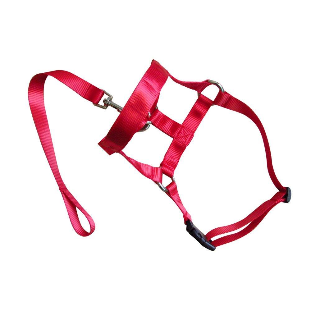 UxradG Anti-Zugleine und Kopfhalfter zum Training für Hunde aus weicher Baumwolle