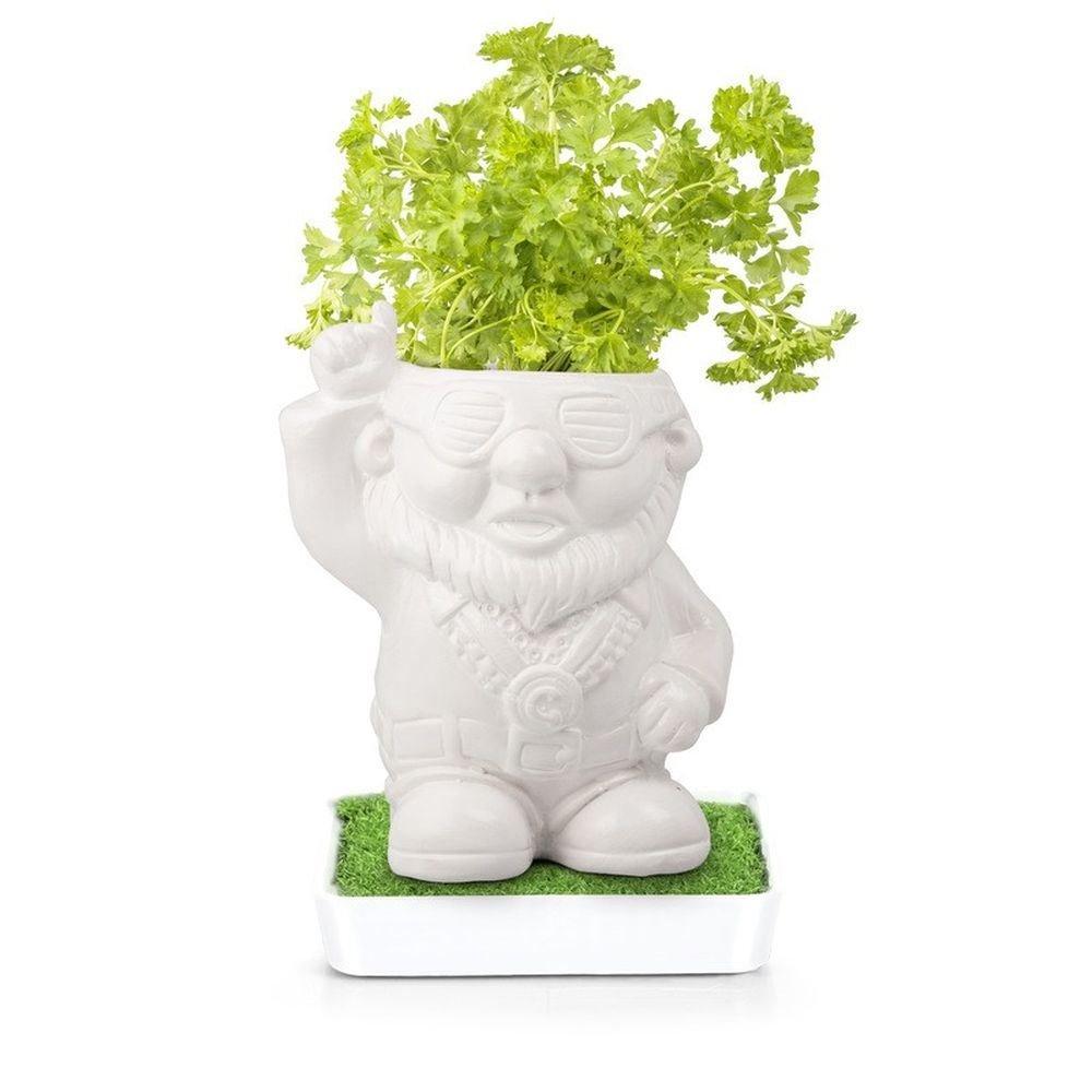 Krä uter Kö pfe Disco Dave Grow Petersilie Pflanzen Garten, der in Keramiktopf TGO