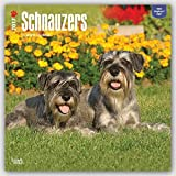 Schnauzers - 2017 - 12inch x 12inch Hanging Square Wall Photographic Dog Puppy Planner Calendar