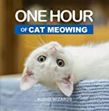 One Hour of Cat Meowing