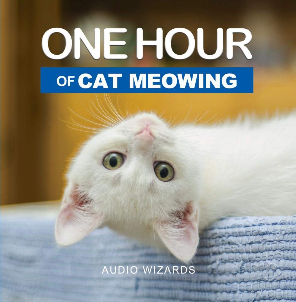 One Hour of Cat Meowing by Audio Wizards Audio Magic