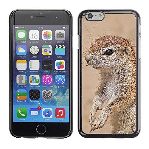 "Premio Sottile Slim Cassa Custodia Case Cover Shell // F00024689 Jeune marmot // Apple iPhone 6 6S 6G PLUS 5.5"""