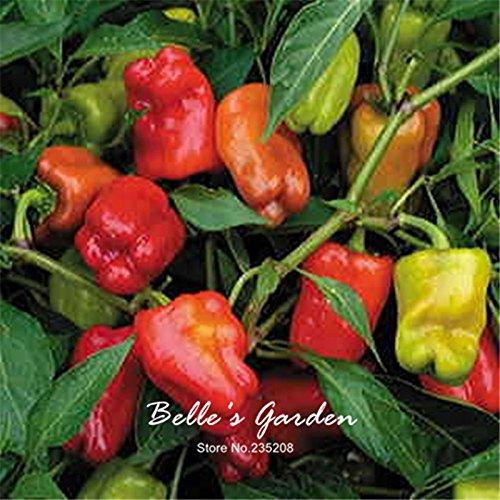 100pcs Cajun Belle Hybrid Pepper Seeds Vegetable Home Garden Bonsai Plant