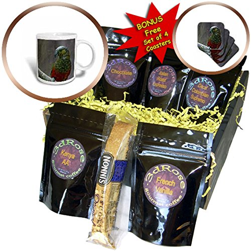 Danita Delimont - New Zealand - Kaka, New Zealand, mist from waterfall, Milford Sound - Coffee Gift Baskets - Coffee Gift Basket (cgb_226481_1) (Gift Basket New Zealand)