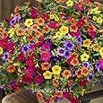 200Seeds/Pack Heirloom Hanging Petunia Mixed Seeds Color Waves Hanging Basket Petunia Beautiful Flowers Light Up Your Garden