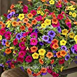 200Seeds/Pack Heirloom Hanging Petunia Mixed Seeds Color Waves Hanging Basket Petunia Beautiful Flowers Light Up Your Garden