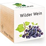 Wilder Wein im Holzwürfel
