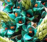 Brand New! 2017 giant bromeliad, 50pcs bromeliad rare seeds, vibrant turquoise blooms, electric blue, drought tolerant, home garden