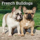 French Bulldogs 2019 12 x 12 Inch Monthly Square Wall Calendar, Animals Dog Breeds French (Multilingual Edition)