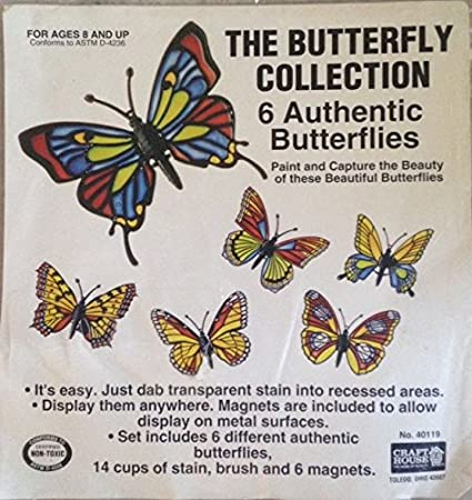 b37cbc5ec569b The Butterfly Collection - 6 Authentic Butterflies - Paint and Capture the  Beauty - Craft House