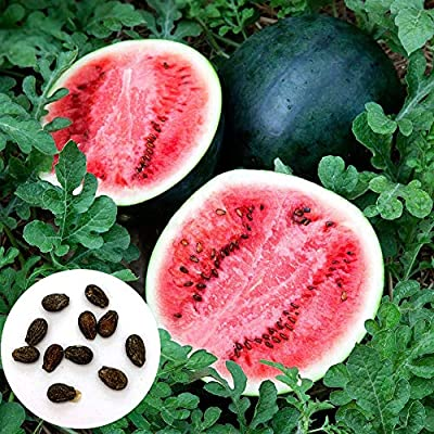 Oyov2L 100Pcs Watermelon Seeds Sweet Summer Juicy Fruit Garden Yard Farm DIY Plant Easy Grow Seeds Decorative Plants Watermelon Seeds : Garden & Outdoor