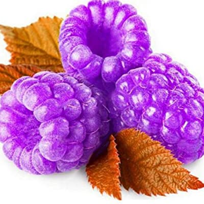 1000Pcs Raspberry Seeds Framberry Delicious Fruit Home Garden Yard Organic Plant - Purple Raspberry Seeds : Garden & Outdoor