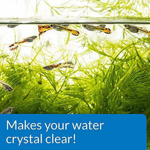 Image of API ACCU-CLEAR Freshwater Aquarium Water Clarifier 1.25-Ounce Bottle