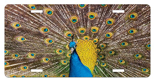 Lunarable Peacock License Plate, Peacock Displaying Feathers Vibrant Colors Eye Shaped Patterns Picture, High Gloss Aluminum Novelty Plate, 5.88 L X 11.88 W Inches, Mustard Blue Brown (Peacock Displaying Feathers)