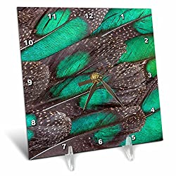 3dRose Danita Delimont - Feathers - Rothschild Peacock Pheasant tail feathers - 6x6 Desk Clock (dc_250152_1)