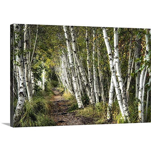 GREATBIGCANVAS Gallery-Wrapped Canvas Entitled A Walk Through The Birch Trees by Danny Head 36