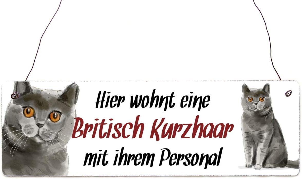 Interluxe Holzschild Dekoschild T/ürschild Hier wohnt eine Britisch Kurzhaar Schild als Geschenk f/ür Menschen mit Katze