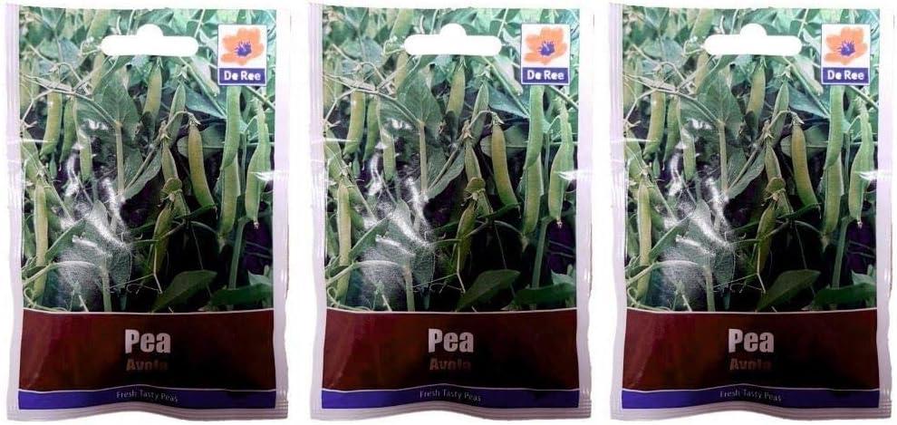 Portal Cool 3 Paquetes de Guisante Avola Semillas Huerto: Amazon ...