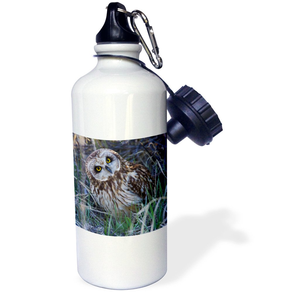 3dRose wb/_231482/_1 Wild Horse Running Steens Mountains Oregon Water Bottle