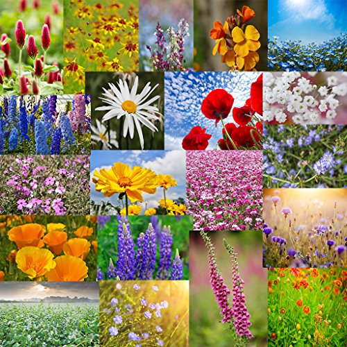 The Dirty Gardener Perennial/Annual Wildflowers - 0.5 Pound