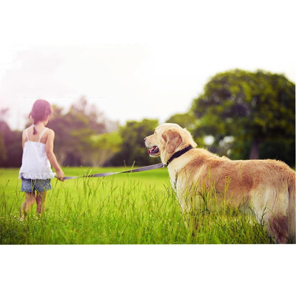 How To Protect The Your Precious Pets Top 20 Of The Best Gps Pet Trackers