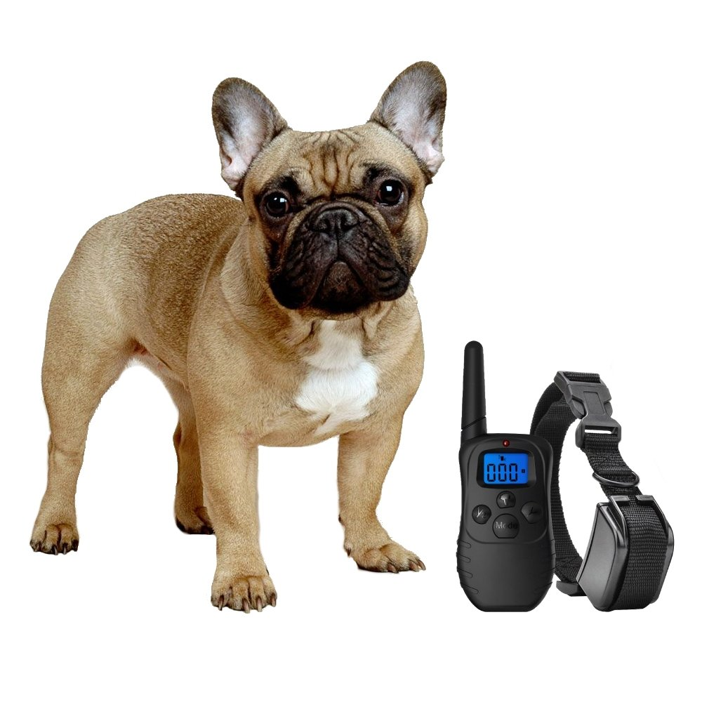 eXuby Shock Collar for Small Dogs with Remote - Includes 2 Collars (small and medium) + FREE Dog Clicker Training – 3 Modes (sound, vibration & shock) – Save Money with Rechargeable Batteries