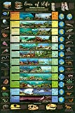 Laminated Eras of Life Geological Time Scale Educational Science Chart Poster 24 x 36
