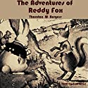 The Adventures of Reddy Fox Audiobook by Thornton W. Burgess Narrated by Tom Weiss