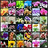 SALE! 200PC Butterfly Orchid Seeds, 36 Varieties of Beautiful Bonsai Flower Seeds, Senior Ornamental Orchid Plants