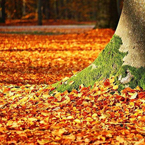 Fall Springs Back ()
