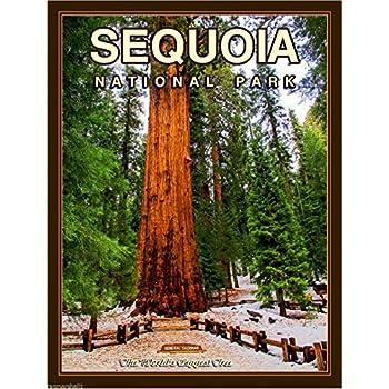 Sequoia National Park California United States Travel Advertisement Art Poster