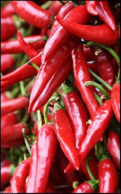 Amazon com : Pulla Or Puya Chili, Chilli, Chile(30 Pepper Seeds