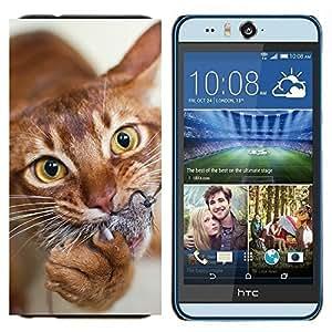 TECHCASE---Cubierta de la caja de protección para la piel dura ** HTC Desire Eye ( M910x ) ** --Gato Naranja American Shorthair Chausie