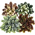Gejoy 4 Pieces Artificial Succulents Unpotted Faux Echeveria Assorted Colors Artificial Plants for Home Garden Decorations
