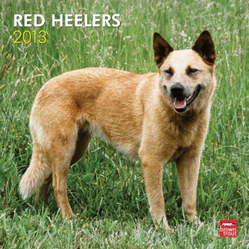 red heeler calendar - 7