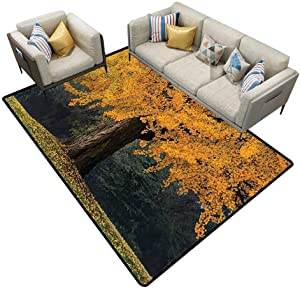 Carpet for Living Room Farm House Decor an Old Tree with Golden Leaves During Fall Evergreen Forest at The Back Seasonal Art Gold Brown Rugs Area 7'6x7'6