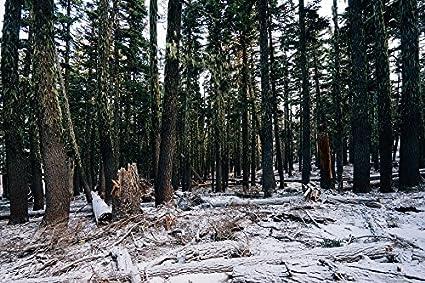 amazon com laminated poster nature dark winter wood trees cold