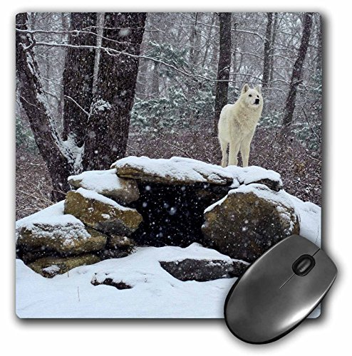 3dRose LLC 8 x 8 x 0.25 Inches Mouse Pad, Arctic Wolf 2 (mp_100274_1)