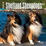 Shetland Sheepdogs 2018 7 x 7 Inch Monthly Mini Wall Calendar, Animals Dog Breeds (Multilingual Edition)