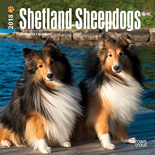 Shetland Sheepdogs 2018 7 x 7 Inch Monthly Mini Wall Calendar, Animals Dog Breeds (Multilingual Edition)